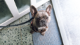 Best DC Neighborhoods For Dog Owners