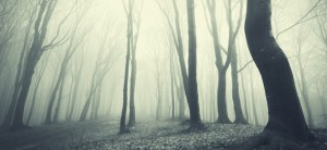 HauntedWoods1