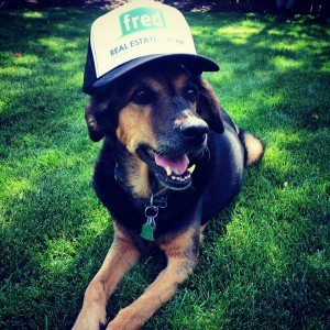 Our office dog, Ginger, was only too happy to rock her trucker hat in celebration of her special day today!