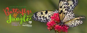 Butterfly Jungle 2018