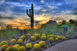 desert-botanical-garden-300x200