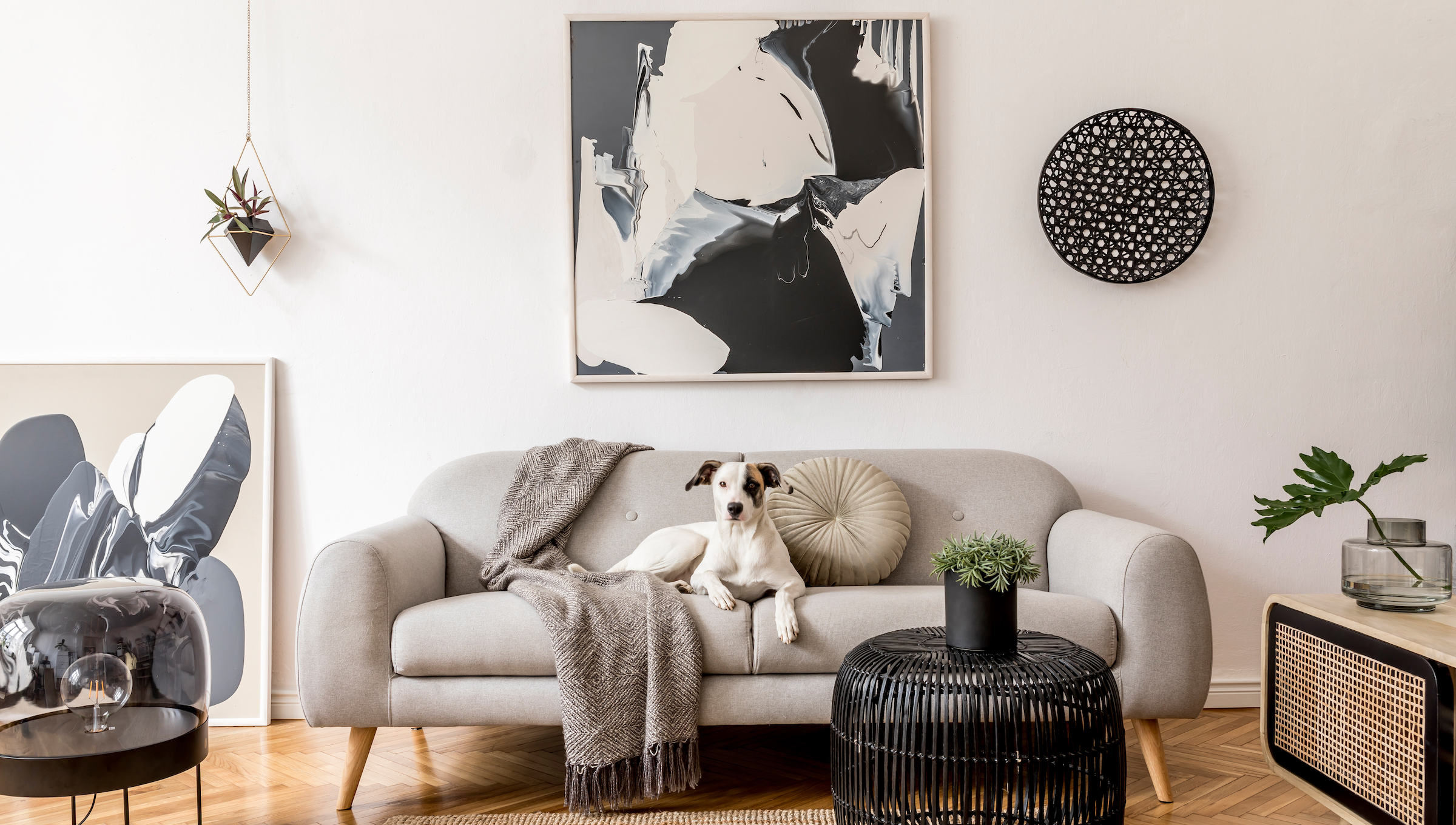Modern Designed living room with dog on the sofa