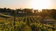 Northern Michigan Vineyard overlooking the Bay