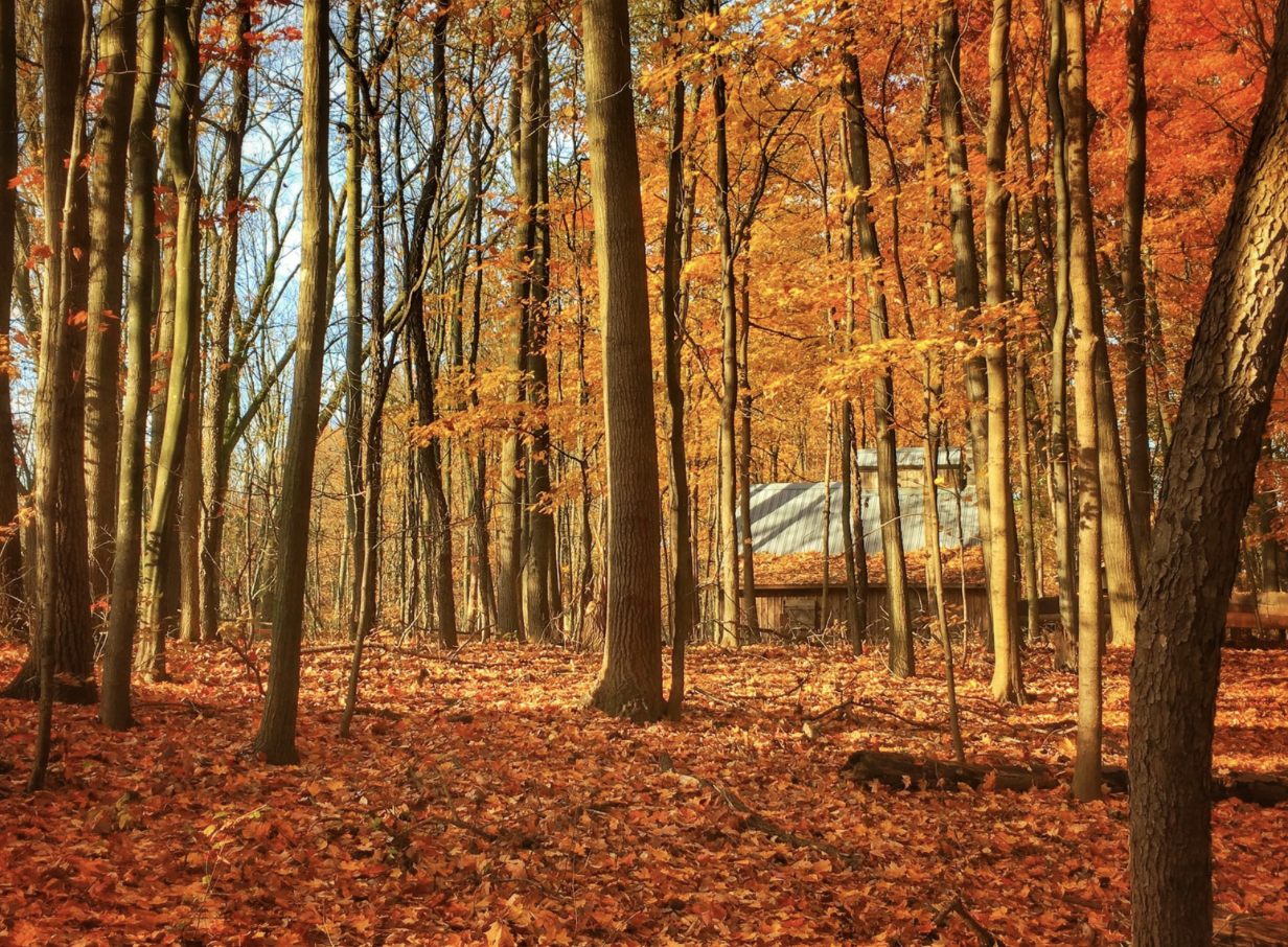 Northern Michigan Fall with Brick & Corbett Real Estate