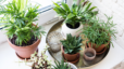 3 Compelling Reasons Why You Need Houseplants