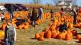 pumpkin-995416_1920