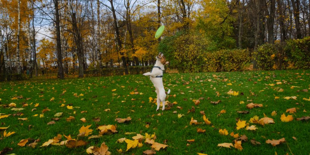 Fall Dog Jumping