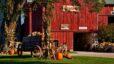 Making Memories: Mulberry Lane Farm