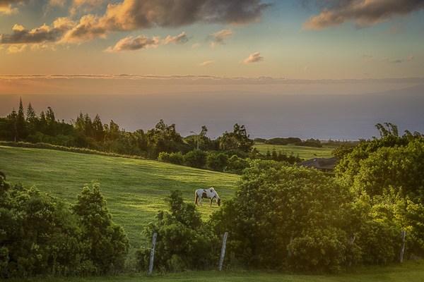 Kohala-MLS-256438-pasture-and-ocean-views