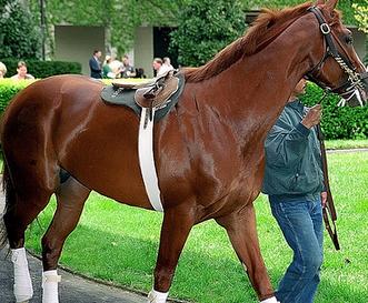 Keeneland Horse Track