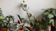 Touring the Triangle: The Zen Succulent