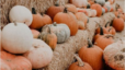 Touring the Triangle: Pumpkins, Gourds, and Mums, Oh My!