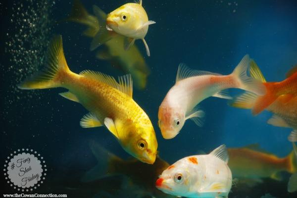 aquarium-feng-shui-friday